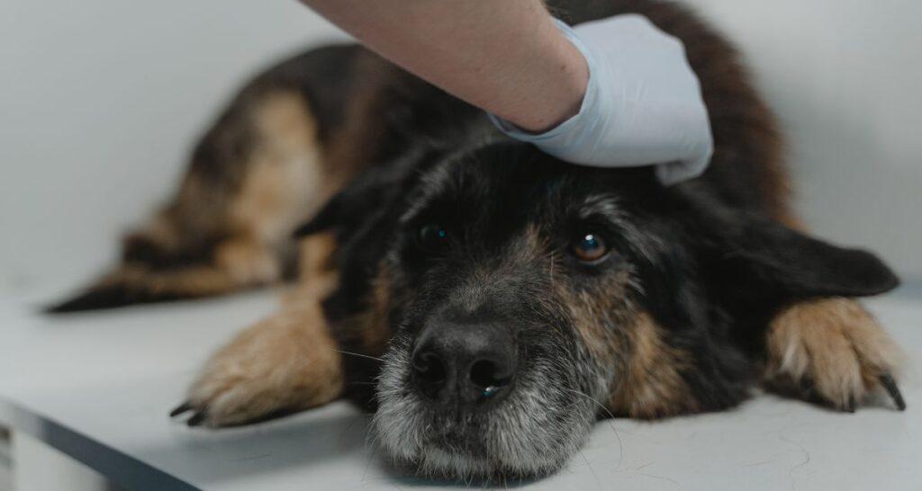 Comunicare lesioni complesse in ambito veterinario